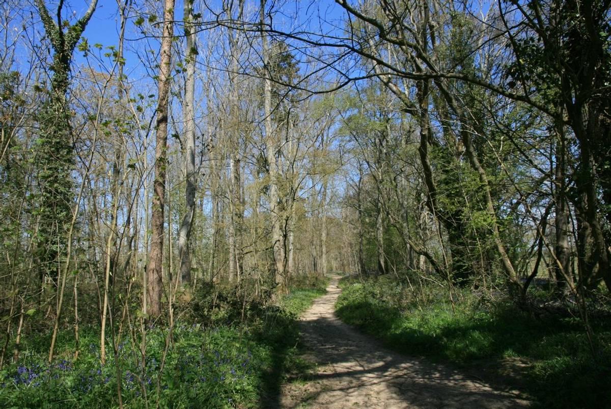 Woodland path Knepp Estate.JPG