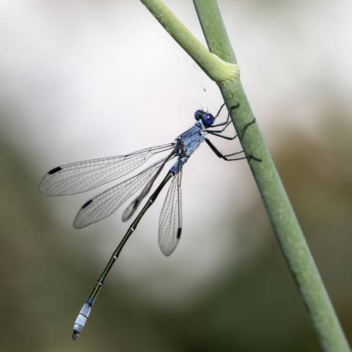 Dark Spreadwing, Colin Brown