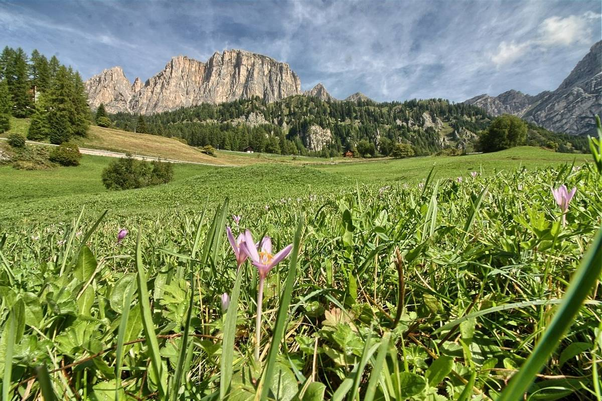 The Dolomites - Selva - AdobeStock_224866590.jpeg