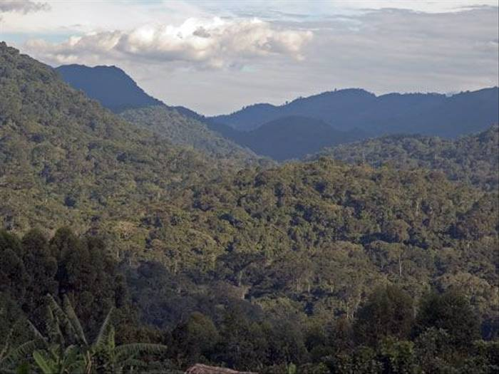 Bwindi Forest (Paul Stanbury)