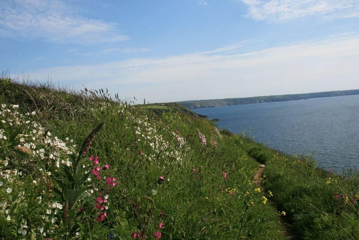 Wild_Flowers_Cornwall.jpg