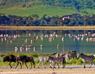 Tanzania's Highlights