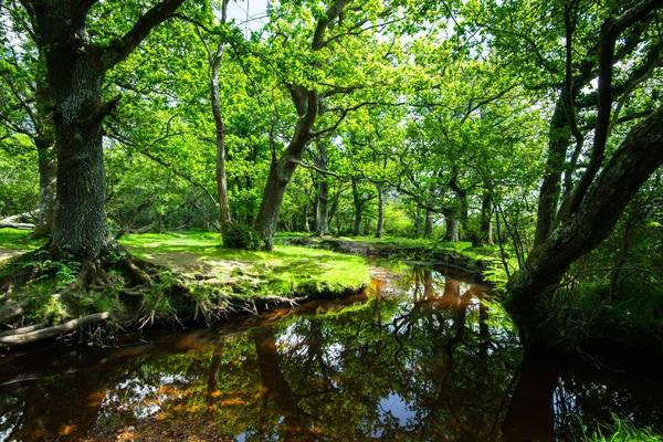 New Forest, Hampshire Shutterstock 654161143