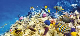 Day 6 - Great Barrier Reef.jpg