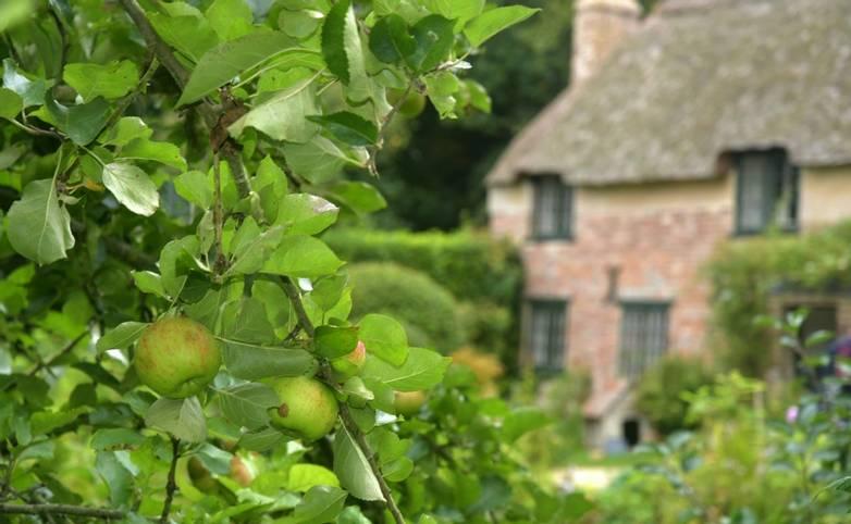 Lulworth - Local Area - Thomas Hardy House -  AdobeStock_249023722.jpeg
