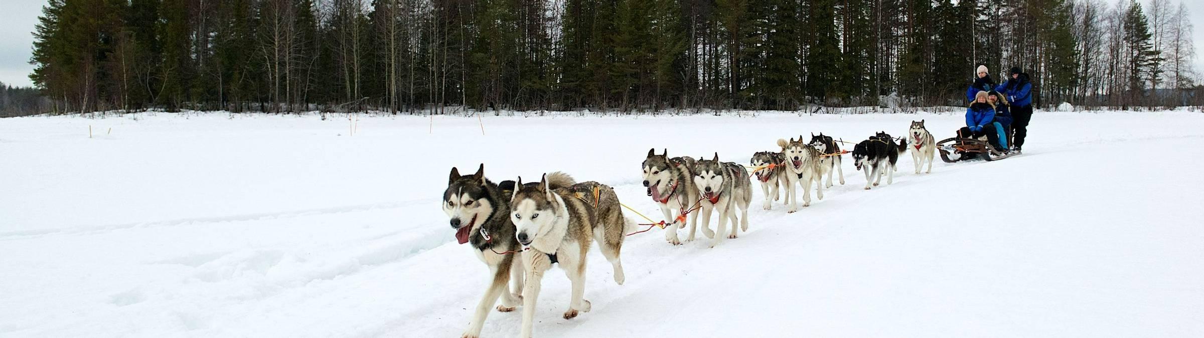 2015, February, Huskies, Lulea, Sorbyn