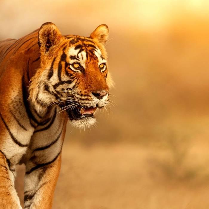 22 Day -  Ranthambhore Tiger Reserve -Itinerary Desktop.jpg