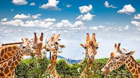 Sydney   Taronga Zoo   446x270