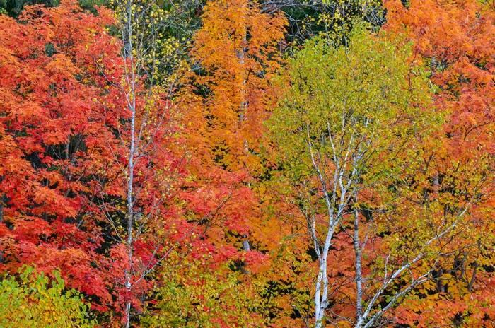 Fall colour, Canada shutterstock_1388322347.jpg