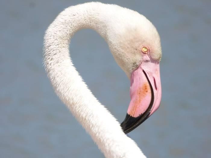 Flamingo (Debbie Hart)