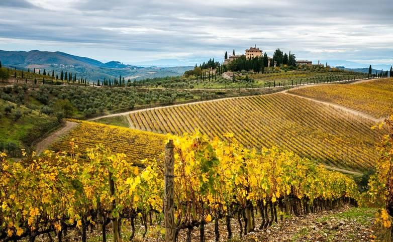 Chianti - Vineyard -AdobeStock_240151232.jpeg