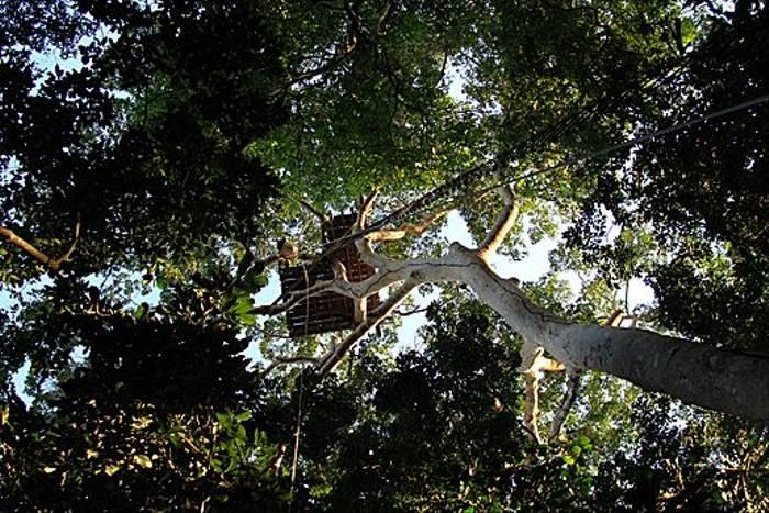 Ironwood Tree Platform (Kiera Griffin)