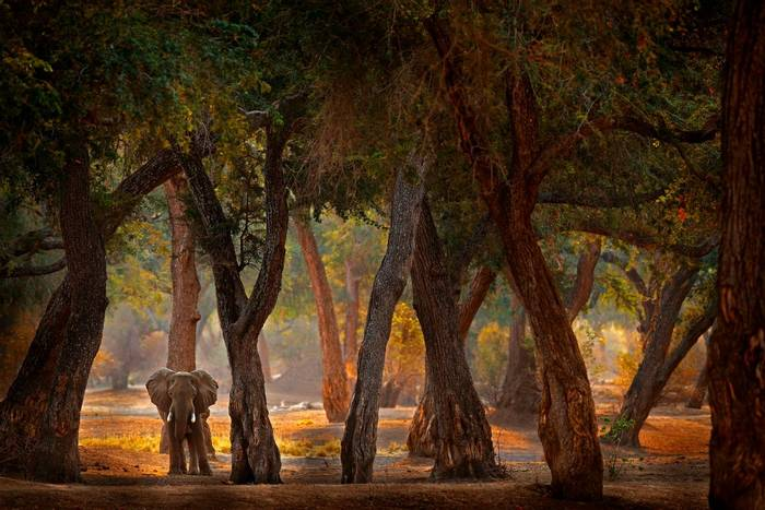 Elephant, Zimbabwe shutterstock_1727952787.jpg
