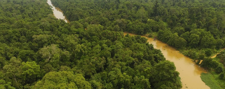 Kinabatangan River   Borneo   Credit Borneo Dream
