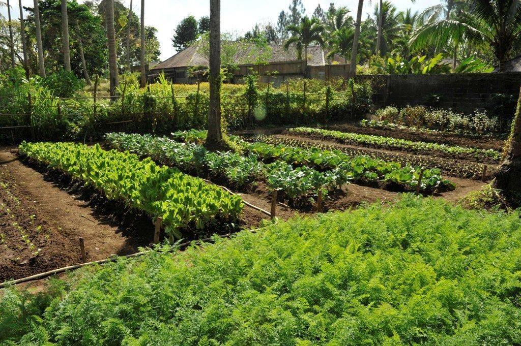 healthy food retreats