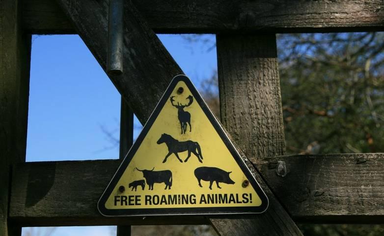 Animal warning sign Knepp Estate.JPG