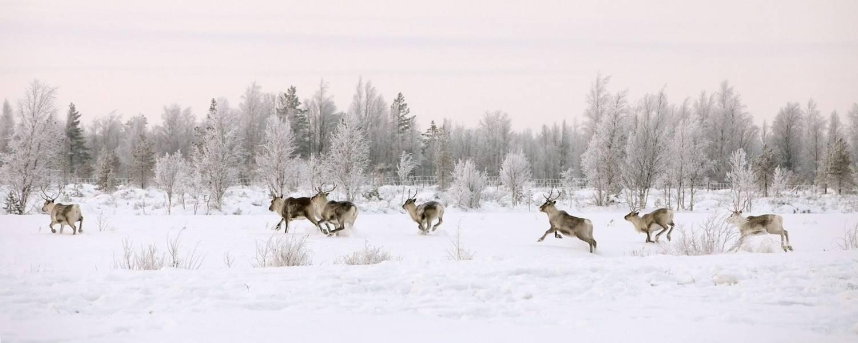 Saariselka - Visit Finland, Vastavalo and Soili Jussila.jpg