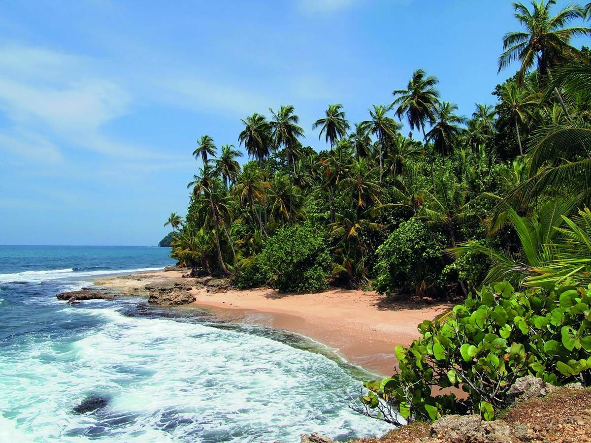 Pristine beach with lush vegetation in the Caribbean