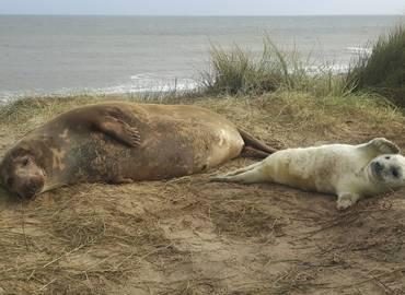 Norfolk - Grey Seals & Winter Birds (Day Trip)