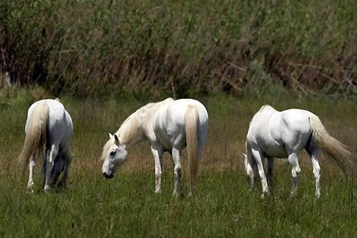 White Horses (Peter Dunn)