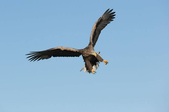 White Tailed Eagle, Norway Shutterstock 275170193