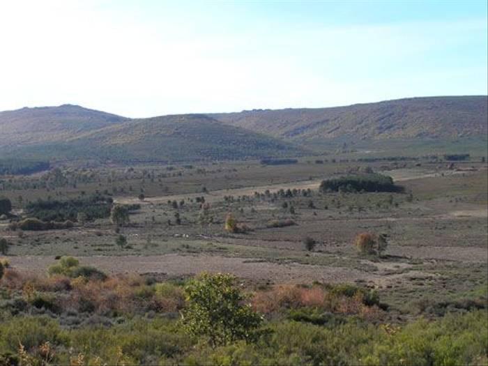 Rolling hills (Thomas Mills)