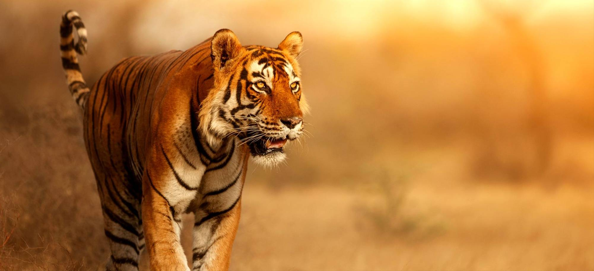 21 Day -  Ranthambhore Tiger Reserve -Itinerary Desktop.jpg