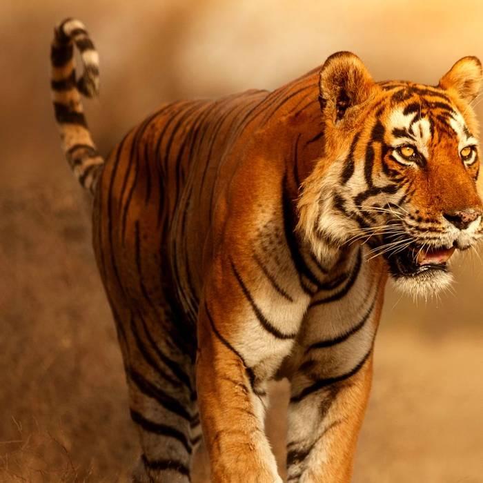 18 Day -  Ranthambhore Tiger Reserve -Itinerary Desktop.jpg