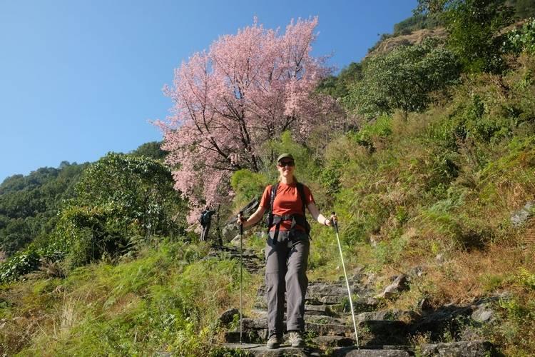 Stone steps on Annapurna Base camp trek in Nepal
