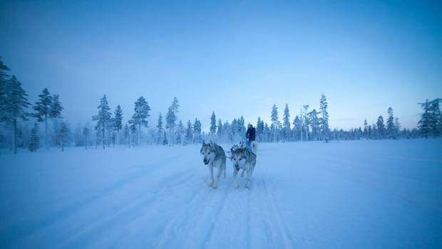 Harriniva - Seven Day Husky Expedition