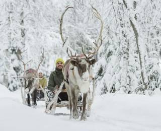 Northern Lights Hunting In Apukka, Finland