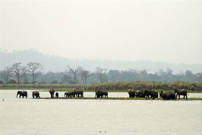 Wild Asian Elephant Herd (Bret Charman)