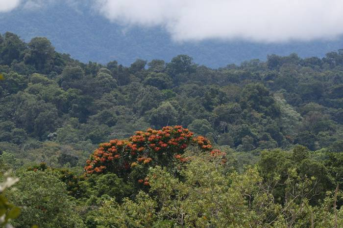 Lowland Pacific forest - Rob Smith