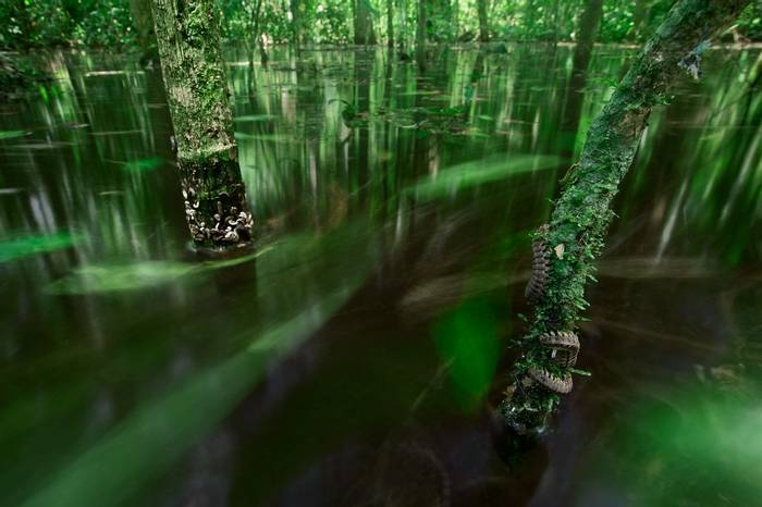 Flooded Forest (Tom Ambrose)