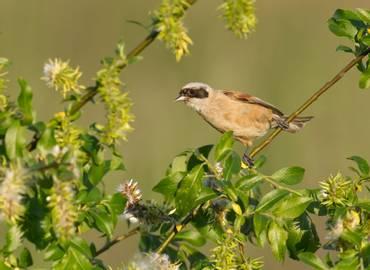 Spring Birding in Sicily