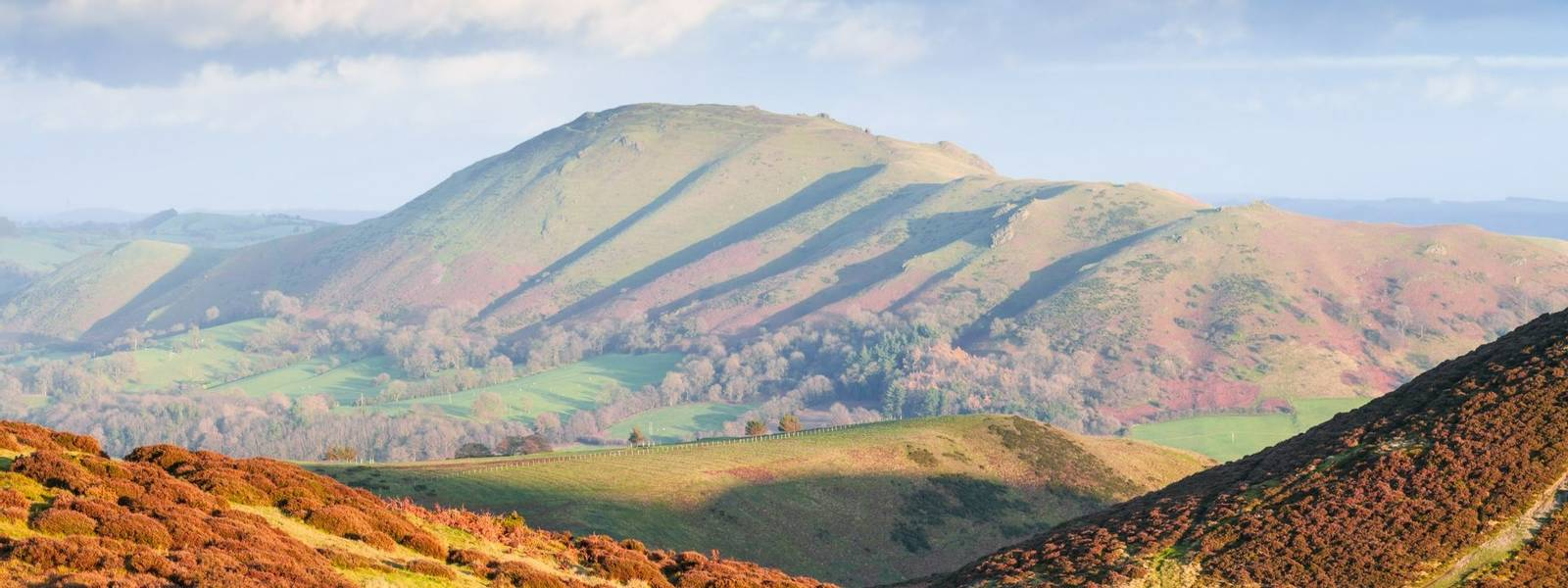Autumnal Heather Hills Flooded in Warm Sunset Light, Carding Mill Valley in Church Stretton, Shropshire
