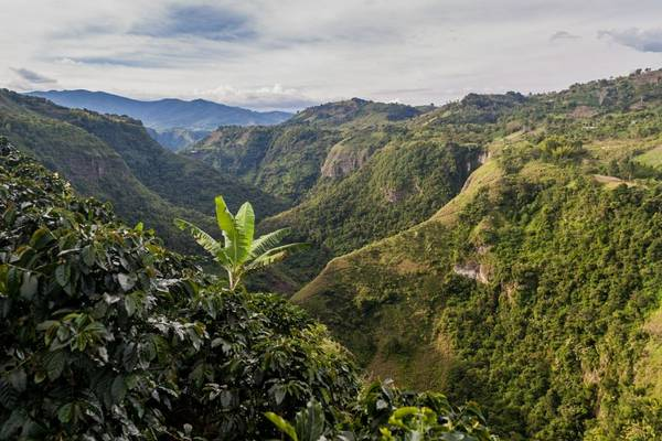 Cauca Valley, Colombia shutterstock_401480527.jpg