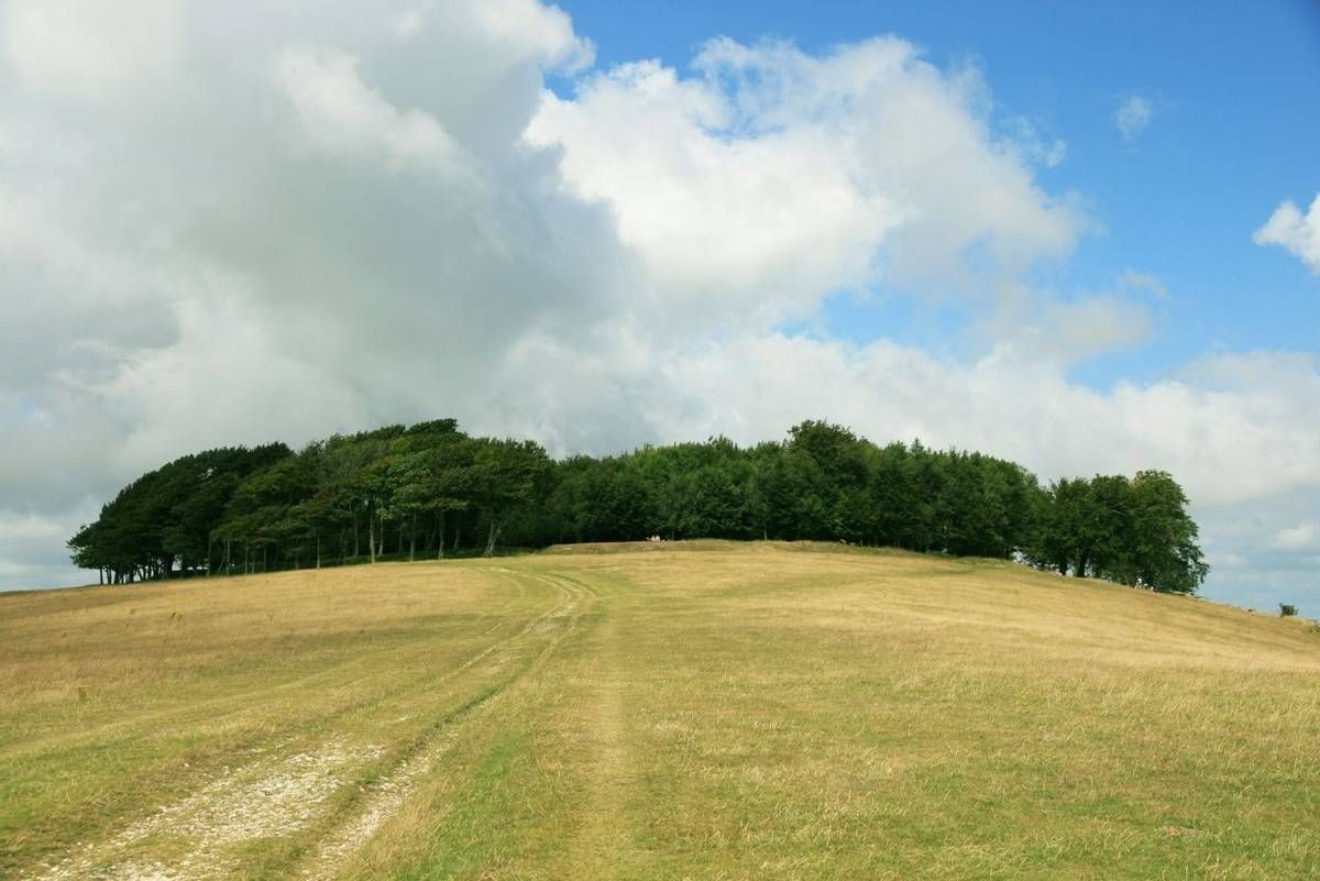 Chanctonbury Ring from SE on South Downs Way.JPG