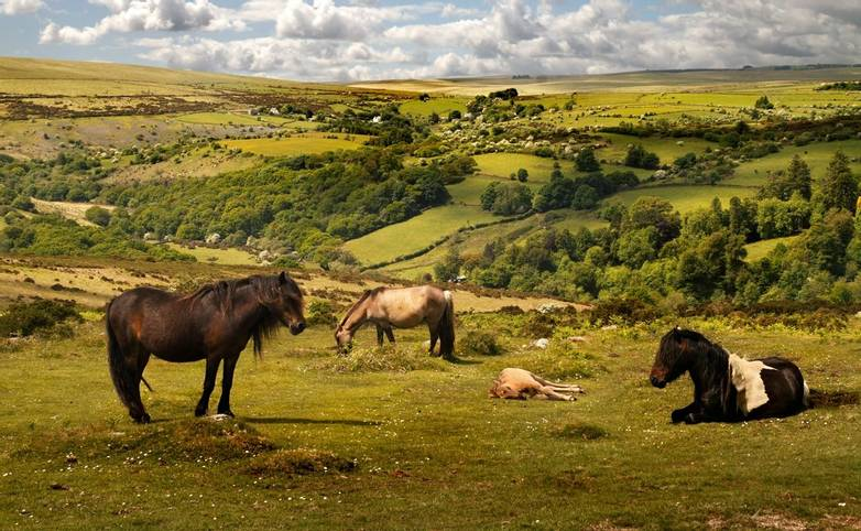 On Exmoor can be found the oldest breed of native pony in the British Isles.
