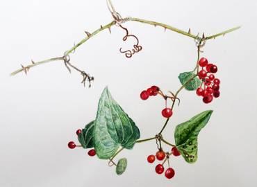 Botanical Painting on Greece's Pelion Peninsula