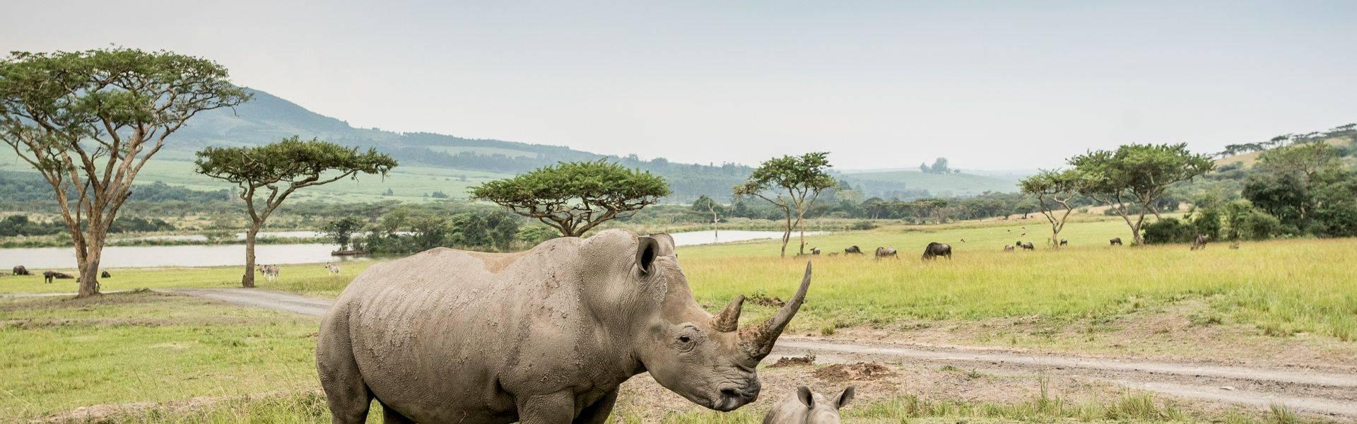Karkloof-Safari-safari-rhino-1.jpg