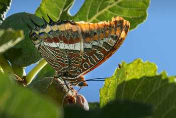 Two-tailed Pasha (Sergio Padura)