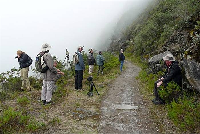 Birding in the Andean cloud, Yanacocha (Robert Davidson)