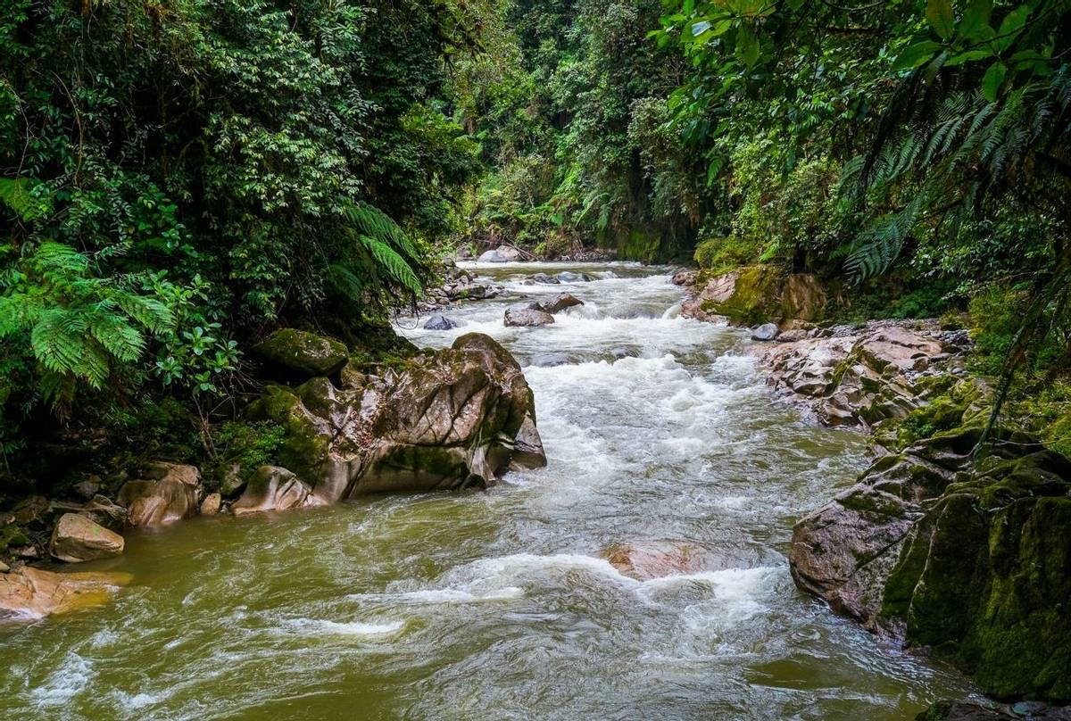 Podocarpus National Park, Ecuador Shutterstock 368528963