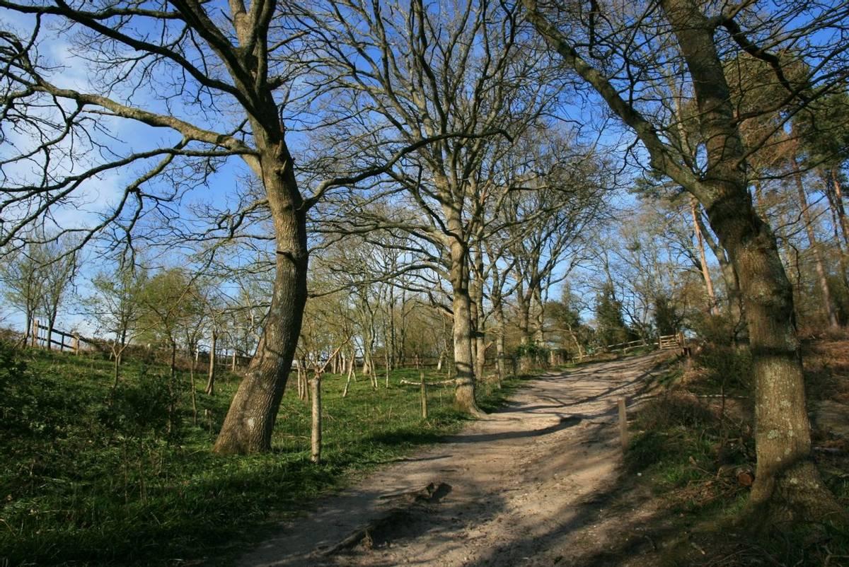 Path_Pulborough_Brooks.JPG