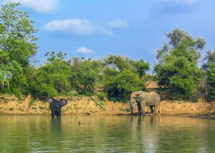 Elephants, Mole, Ghana shutterstock_449306893.jpg