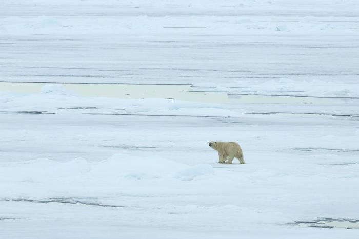 Polar Bear (Bret Charman)