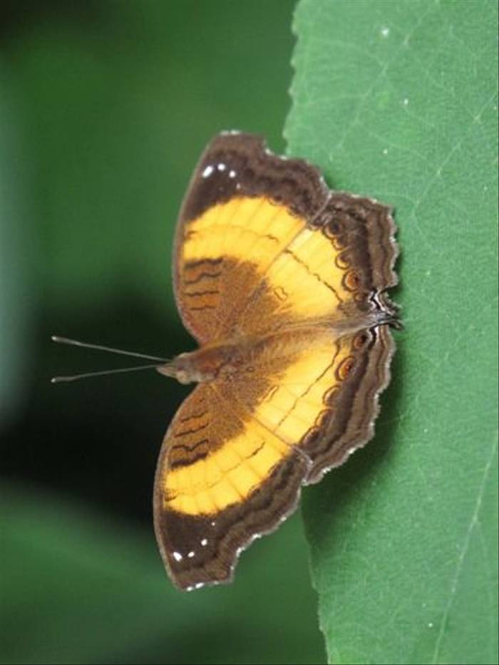 Butterfly (Mike Watson)