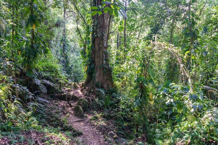 Santa Marta Jungle, Colombia