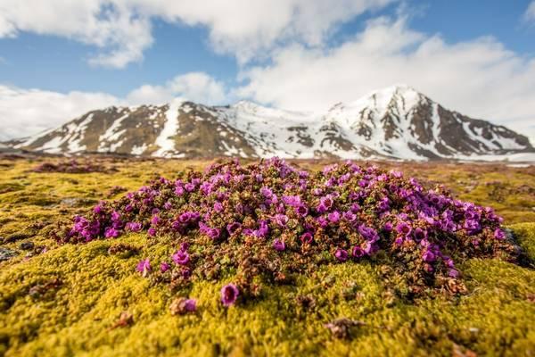 Spitsbergen Shutterstock 505298479
